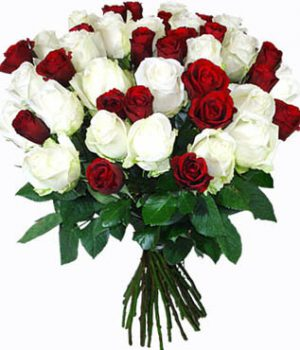 Sw0119 15 Red rose,15White rose 475AED130$